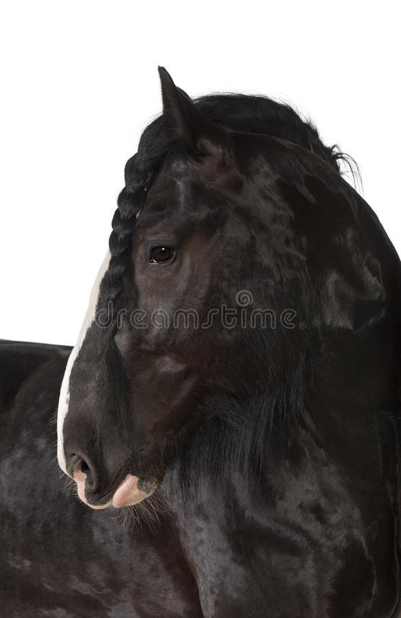 Download Shire Horse looking away stock photo. Image of profile - 27269944