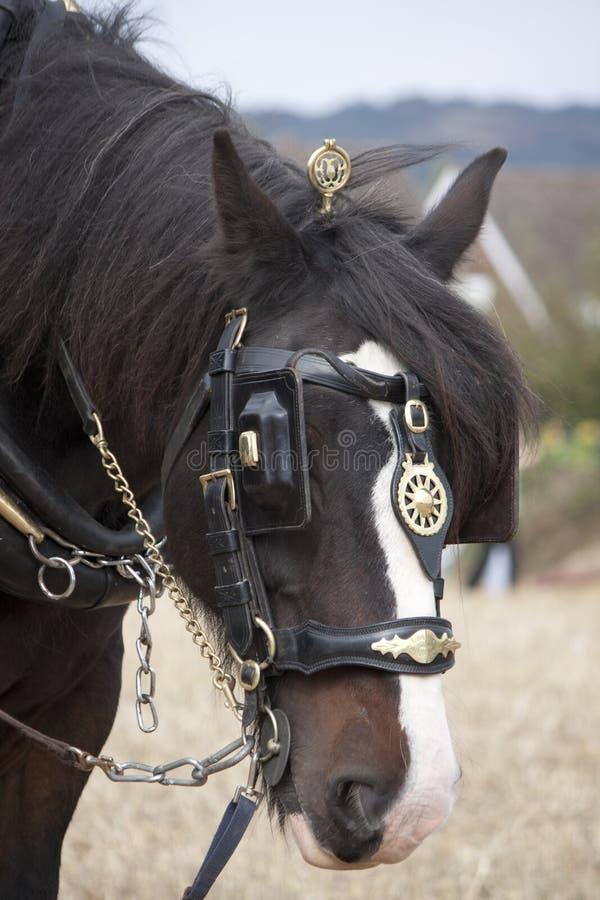 Shirehorse met ploeg royalty-vrije stock afbeeldingen