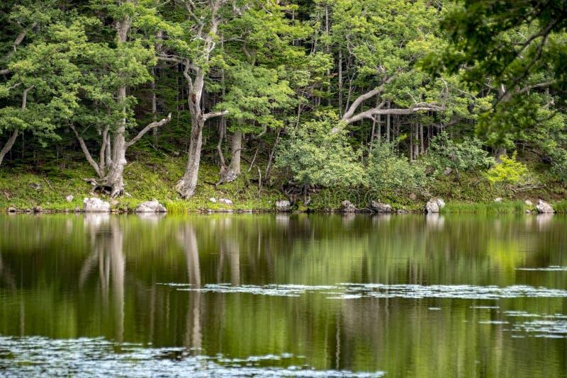 Shiretoko五个湖,北海道,日本 图库摄影