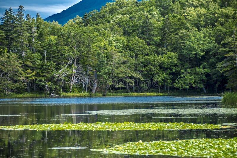 Shiretoko五个湖,北海道,日本 免版税图库摄影