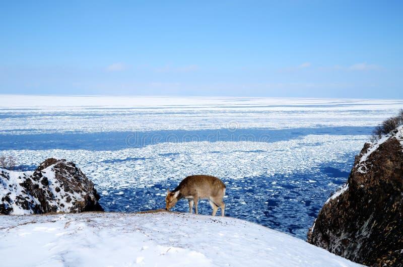 Shiretoko in de winter, Hokkaido, Japan stock afbeeldingen