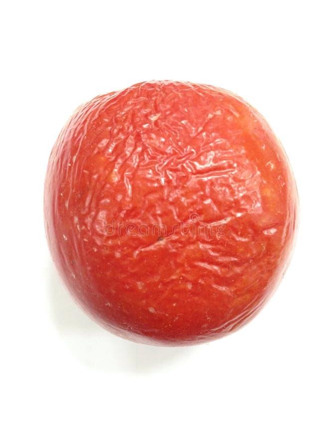Shirnk of Tomato royalty free stock photos