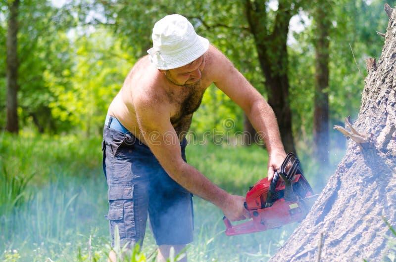 Shirtless man som klipper ner en trädstam royaltyfria foton