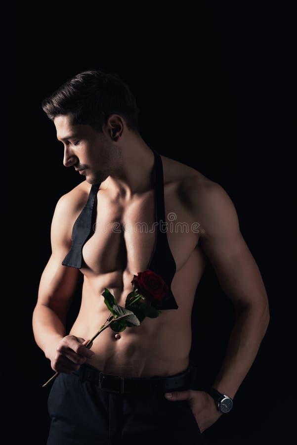 shirtless man som rymmer den röda rosen, poserar och ser bort isolerad arkivfoto