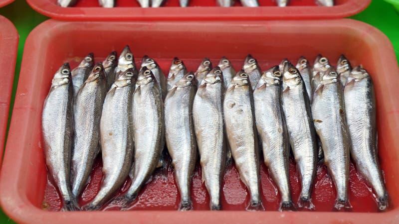 Shishamo, рыба мойвы, рыбы с серией яичек в животе Сырцовый на f стоковые фото