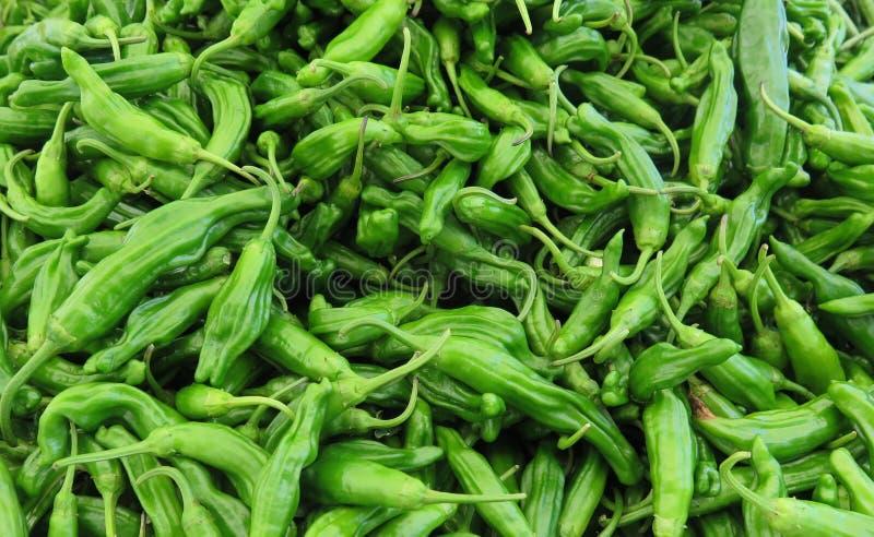 Shishito Peppers stock image