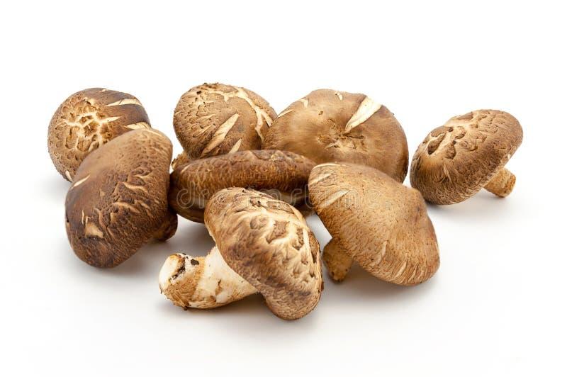 Shitake蘑菇 库存图片