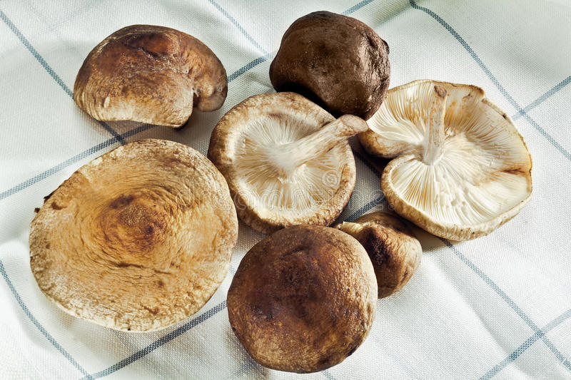 Shitake Mushrooms. On a towel for Organic food concepts stock images