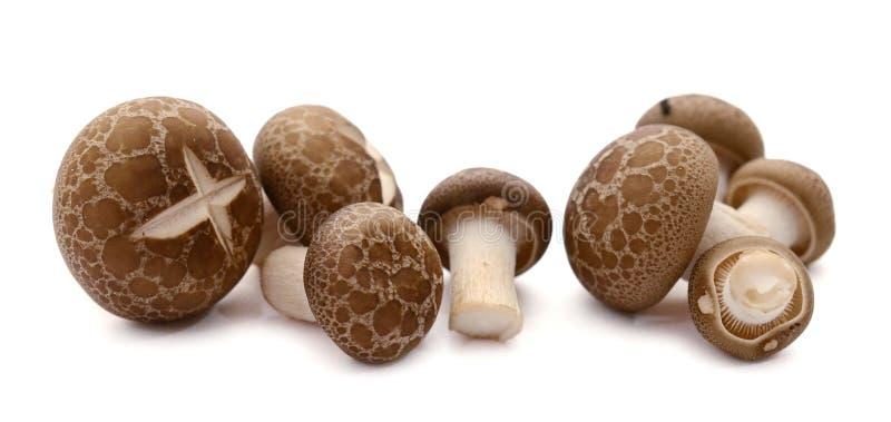 Shitake Mushrooms. Fresh champignon mushrooms isolated on white stock photo