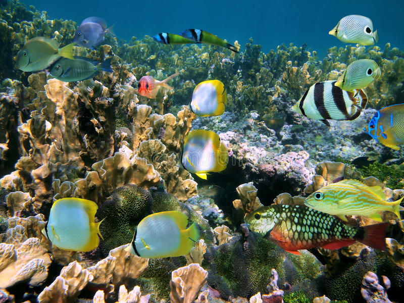 Shoal of colorful fish stock images