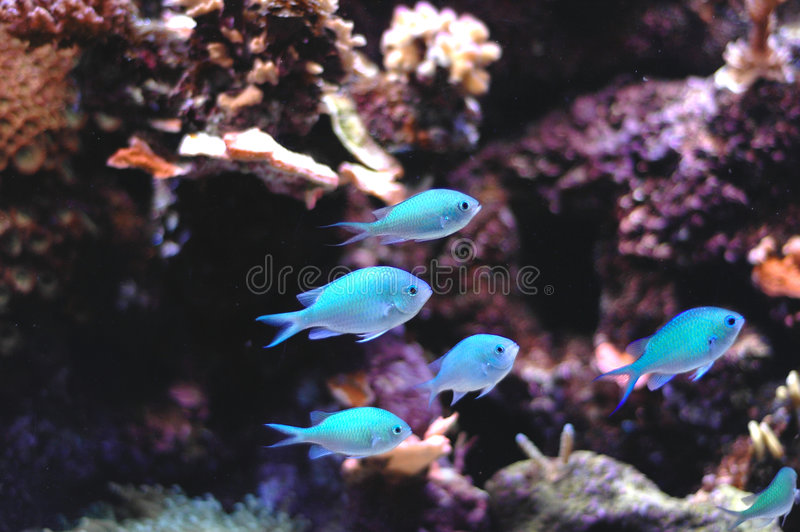 Shoal fish stock photos