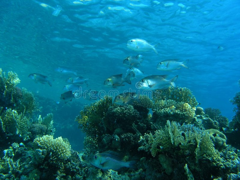 Shoal of fish stock image