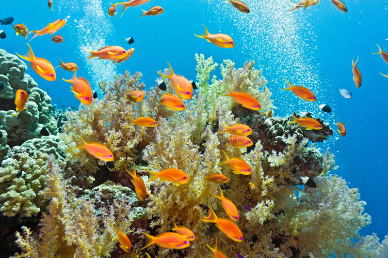 Shoal of fish on the coral reef royalty free stock image