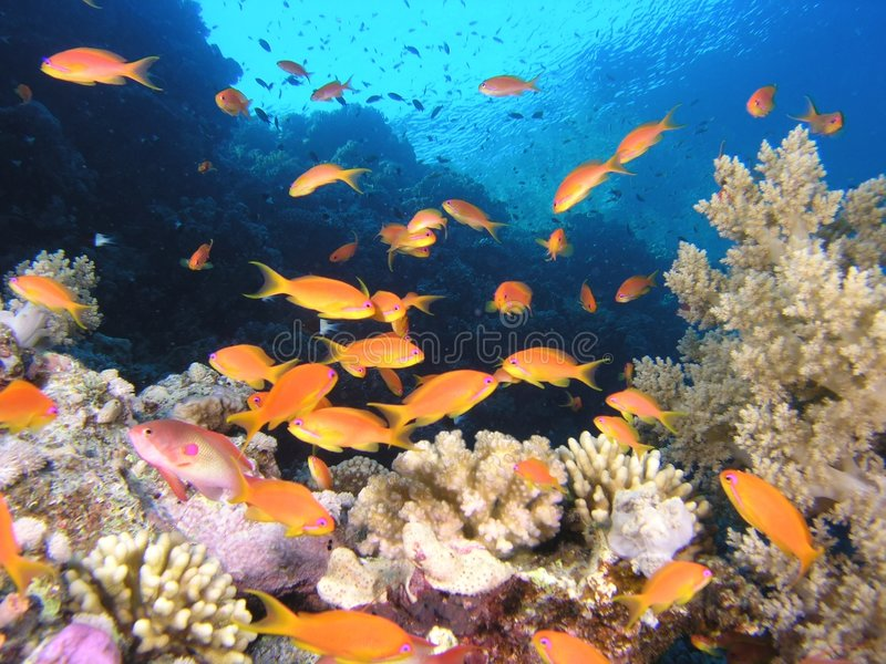 Shoal of fish on the reef royalty free stock photo
