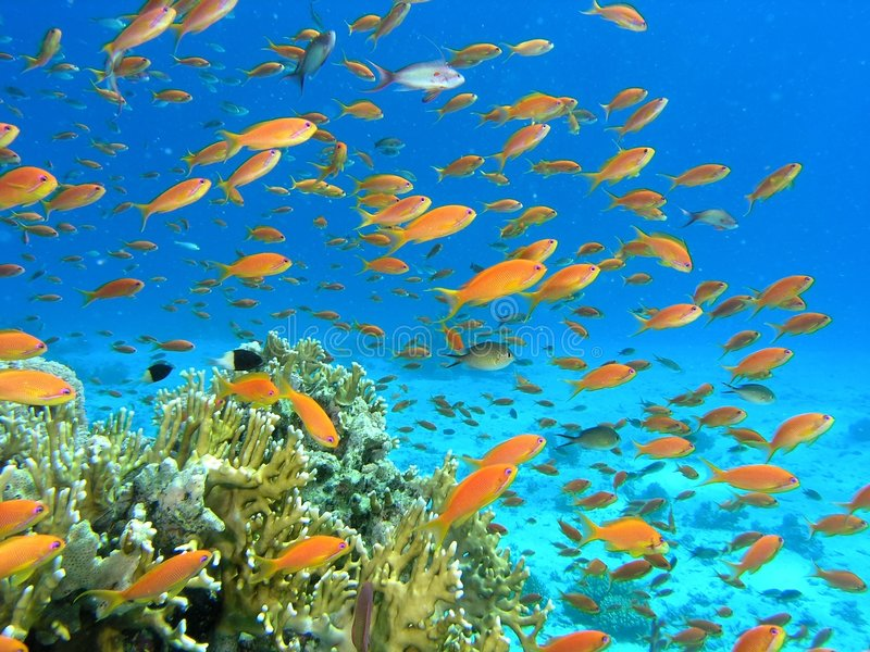 Shoal of fish on the reef royalty free stock photos