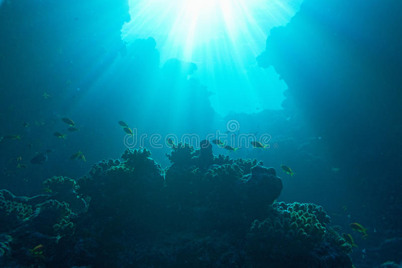 Shoal of fish and sun rise stock photo