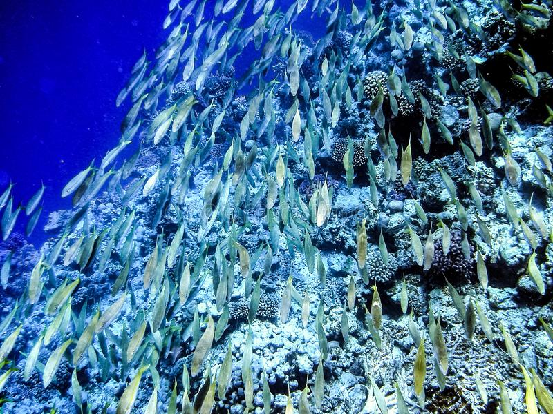 Shoal of fish under the water at the reef stock image