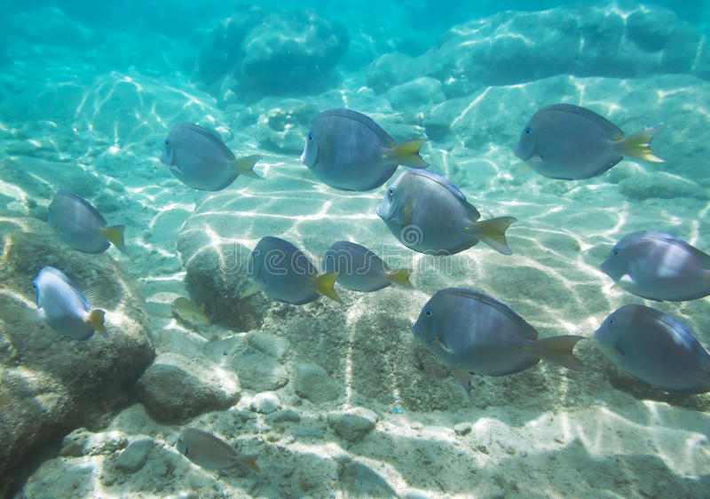 Download Shoal of fishes stock image. Image of swimming, fish - 21435989