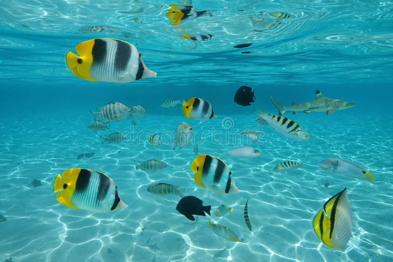 Shoal of tropical fishes in shallow water stock photos
