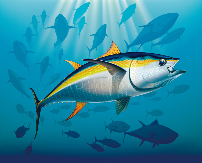 Shoal of yellowfin tuna. In deep water. Realistic vector illustration