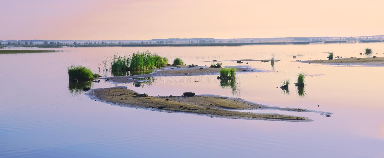 Shoals on the lake. Early summer morning. Calm serene atmosphere. Panorama stock photo