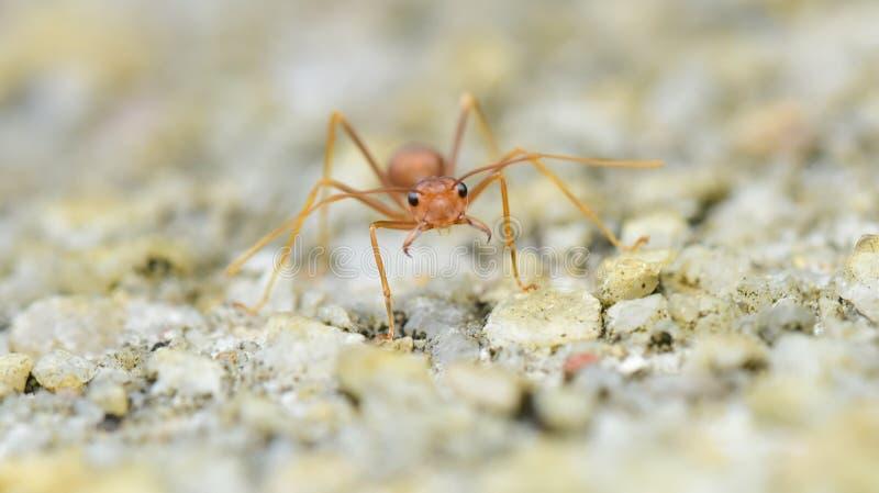 Shocked Ant royalty free stock image