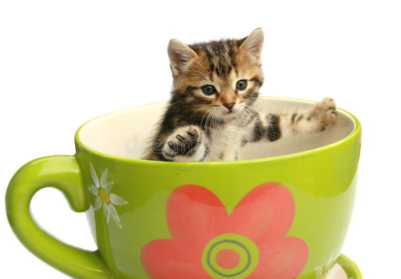 Shocked kitty stock photography