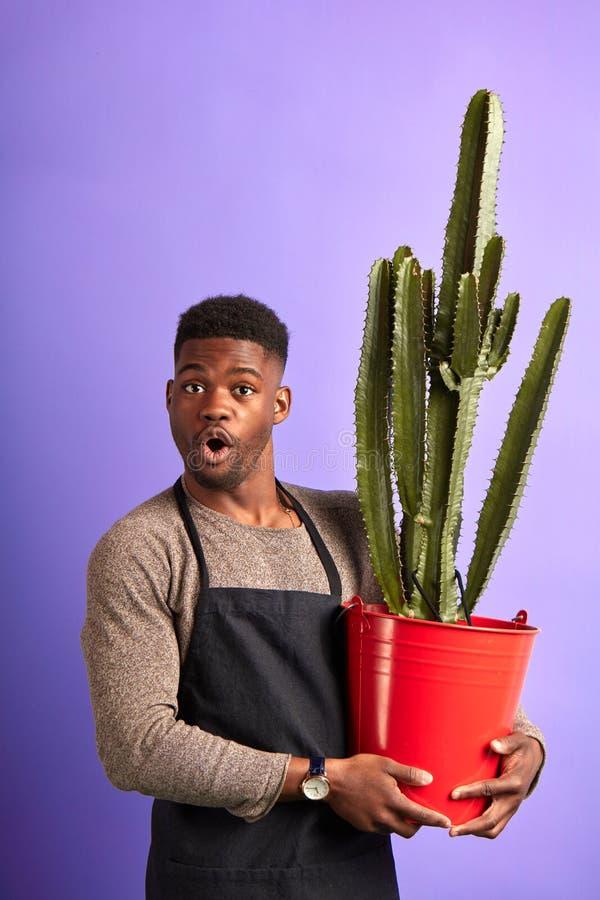 Shocked sorprendi? el cactus de la tenencia del tendero en el pote rojo, mirando la c?mara en p?rpura imagenes de archivo
