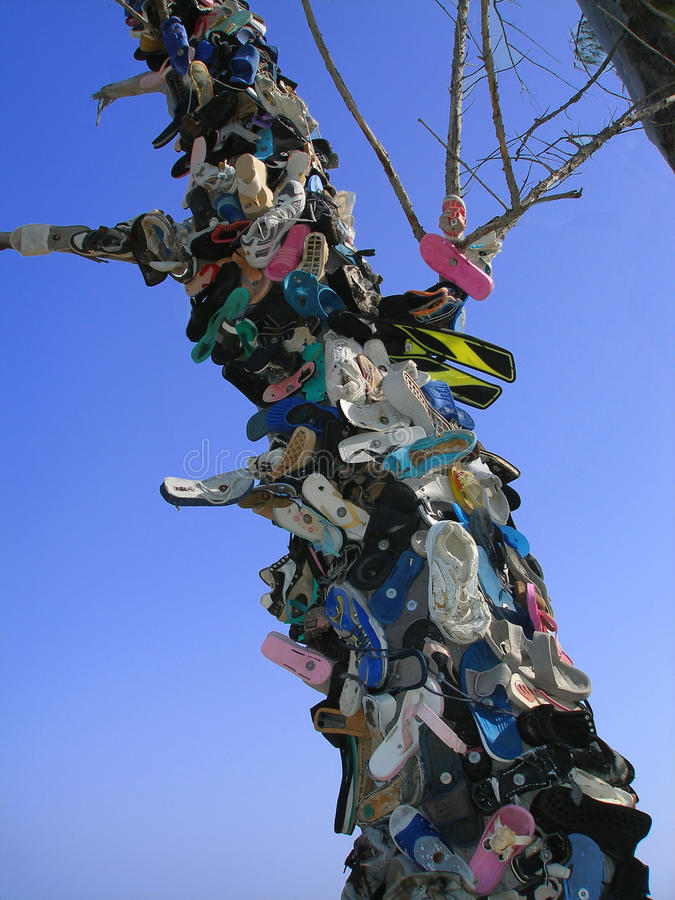 Download Shoe tree stock photo. Image of environmental, recycling - 10393424