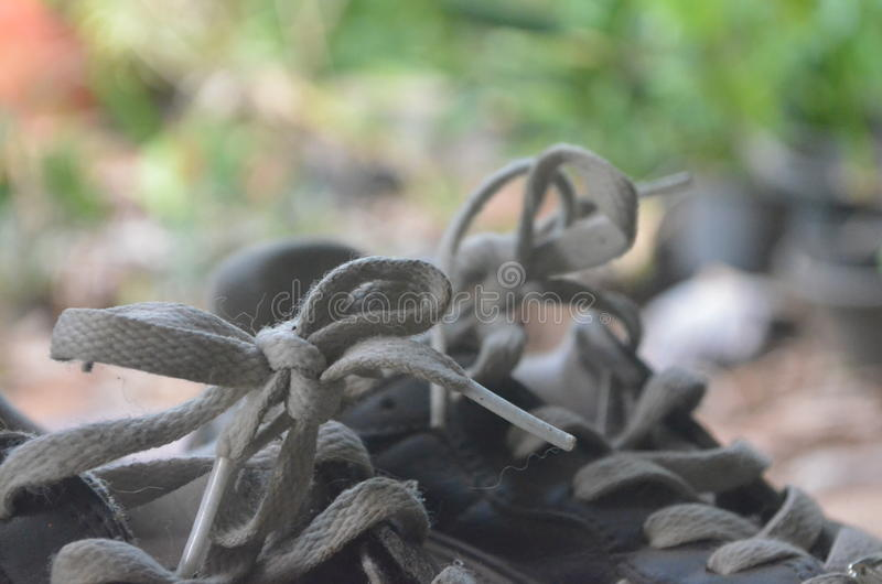 shoelace royaltyfri foto