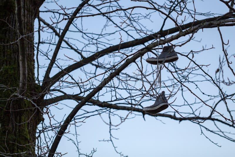 455 Hanging Shoes Tree Photos - Free