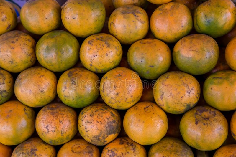 Shogun oranges. The skin slim soft sour flavors are good. Fresh oranges at a local farmers market . royalty free stock photography