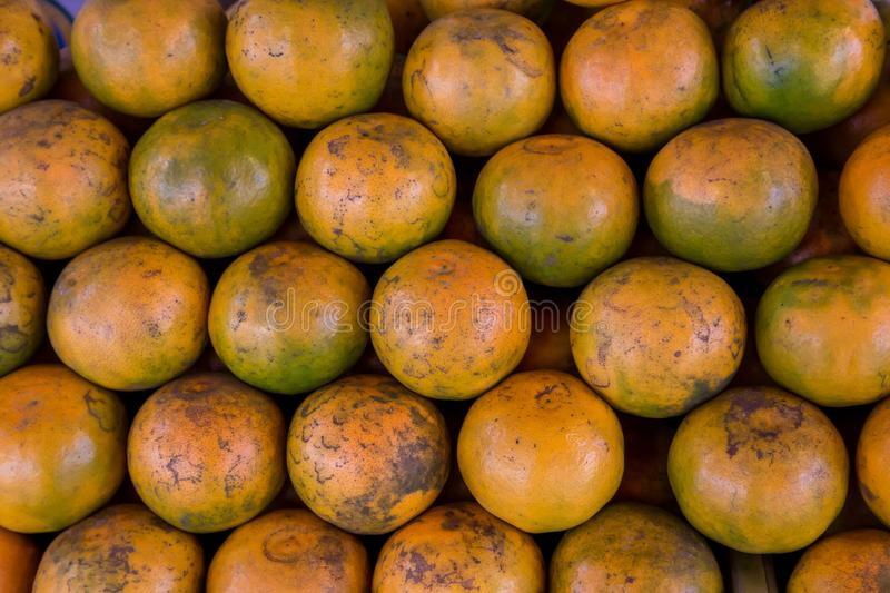 Shogun oranges. The skin slim soft sour flavors are good. Fresh oranges at a local farmers market . Tangerines as the background. stock photography