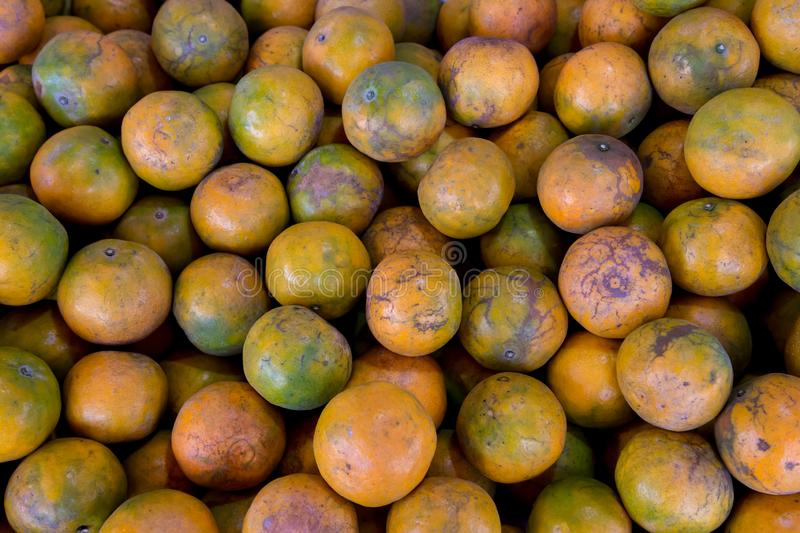 Shogun oranges. The skin slim soft sour flavors are good. Fresh oranges at a local farmers market . Tangerines as the background. royalty free stock images