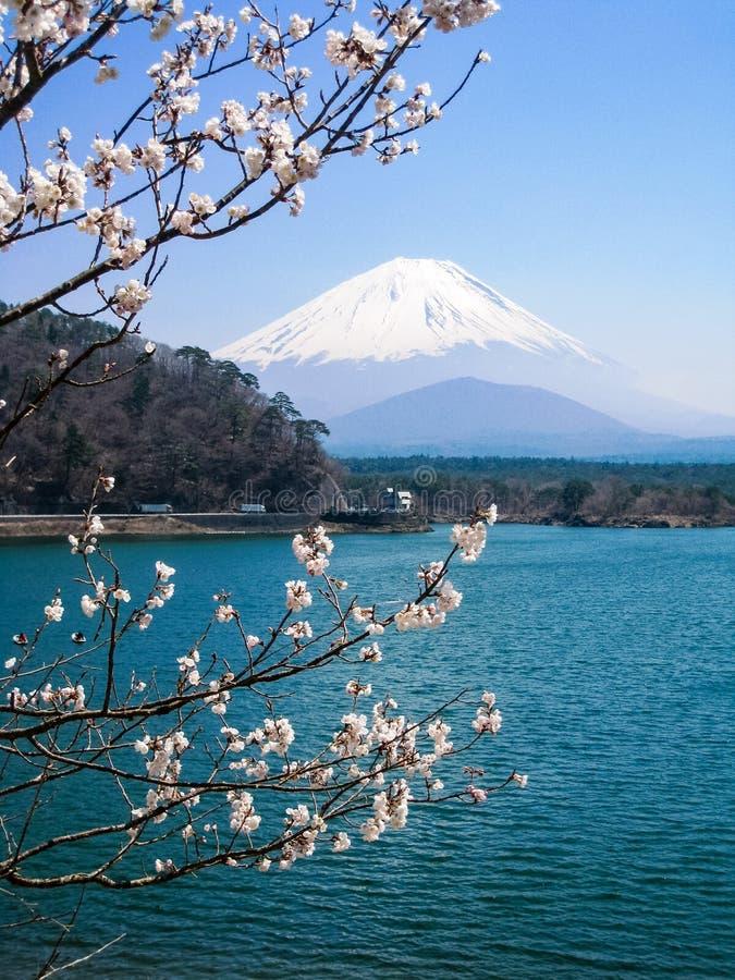 Shoji Lake, el monte Fuji, flor de cerezo, Japón fotos de archivo libres de regalías