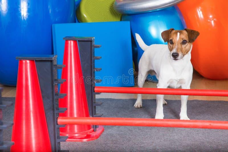 Shool del cane fotografie stock libere da diritti