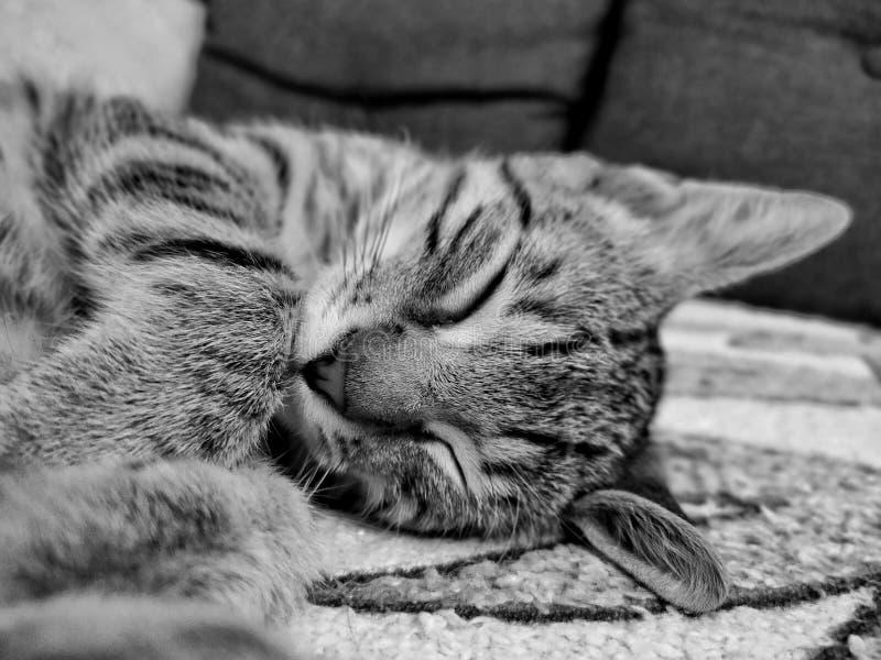 Shooting kitty während des Schlafens lizenzfreies stockbild