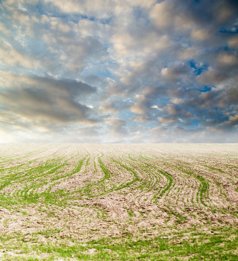 Shoots on the field with a beautiful sky royalty free stock photos
