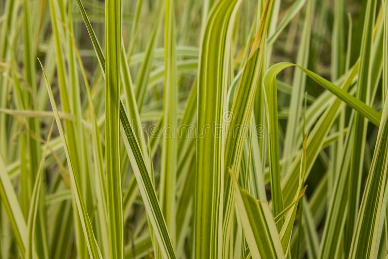 Shoots of grass in spring royalty free stock image