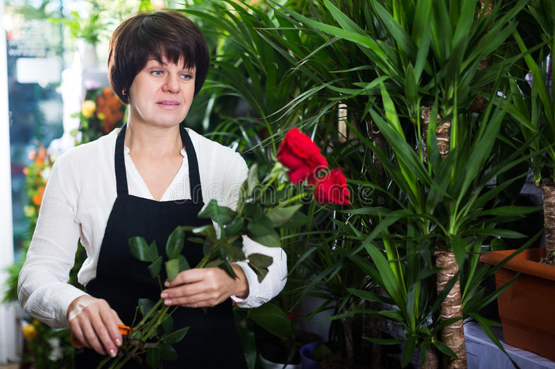 Download Shop Assistant Showing Best Roses Stock Photo - Image: 83701853