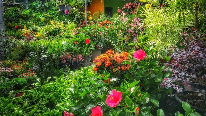 Shoppar den dekorativa grön växt- och plantabarnkammaren för tropiska växter i trädgård arkivbild