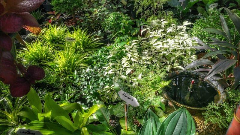 Shoppar den dekorativa grön växt- och plantabarnkammaren för tropiska växter i trädgård royaltyfri bild