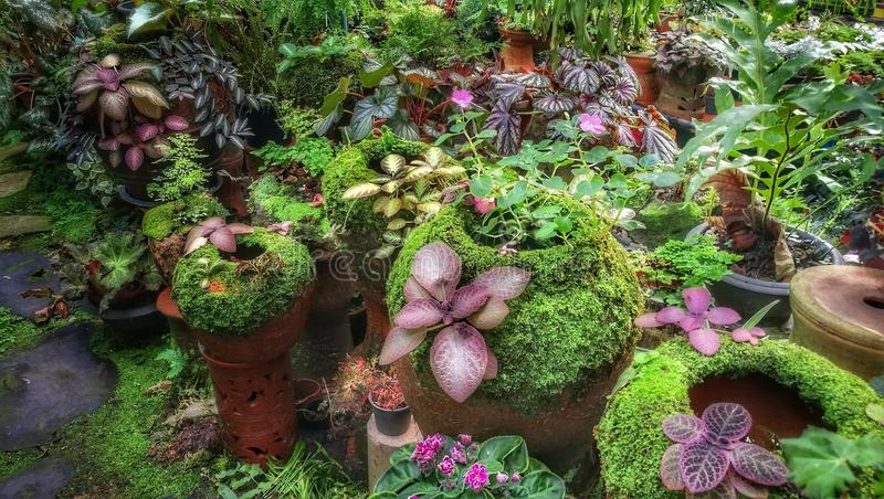 Shoppar den dekorativa grön växt- och plantabarnkammaren för tropiska växter i trädgård royaltyfria foton