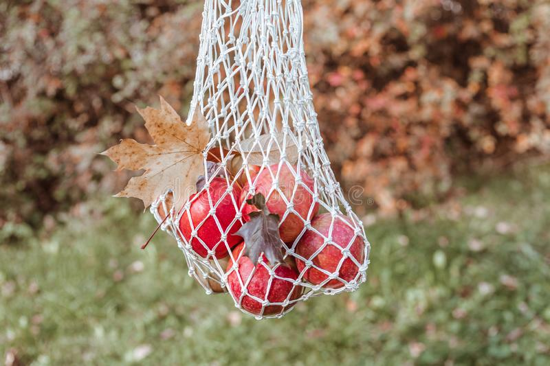 Shopping cotton string bag with red apples and maple leaves. Autumn Zero Waste concept. Horizontal shot royalty free stock photo