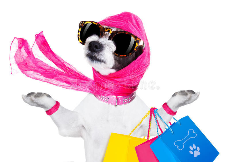 Shopping diva dog royalty free stock images