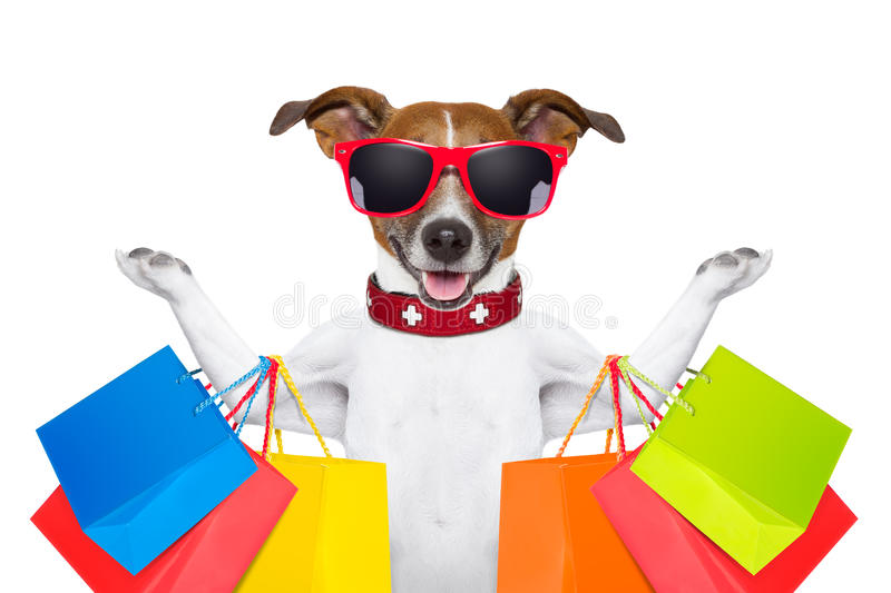 Shopping dog. Jack russell dog with shopping bags ready for discount and sale at the mall, isolated on white background