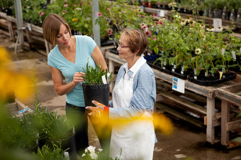 Download Shopping for House Plant stock image. Image of green - 21784325