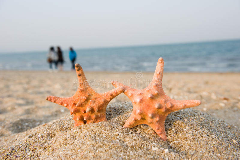 Download On The Shore Royalty Free Stock Images - Image: 25291479