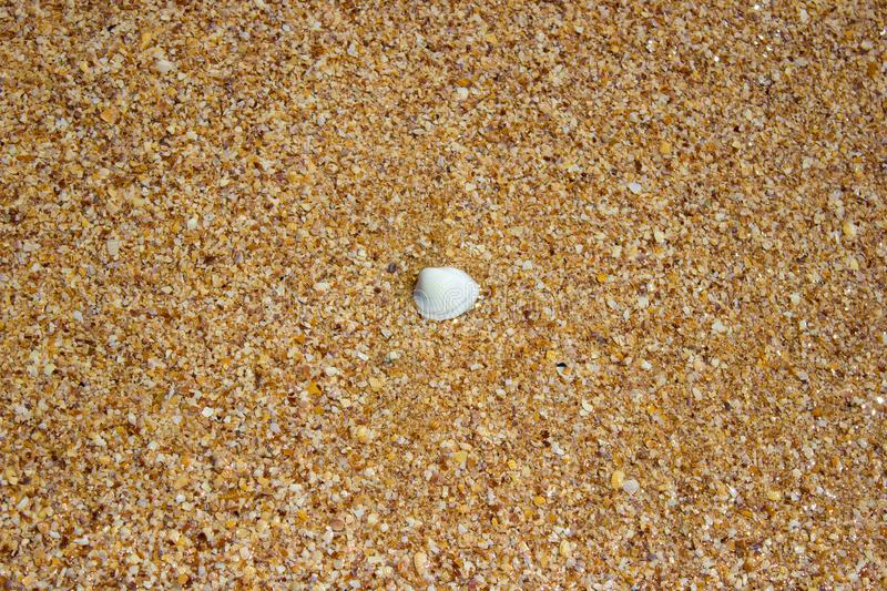 Shore beach water sea wave sand shells, background texture. Shore beach water sea wave sand shells, vacation background texture stock images