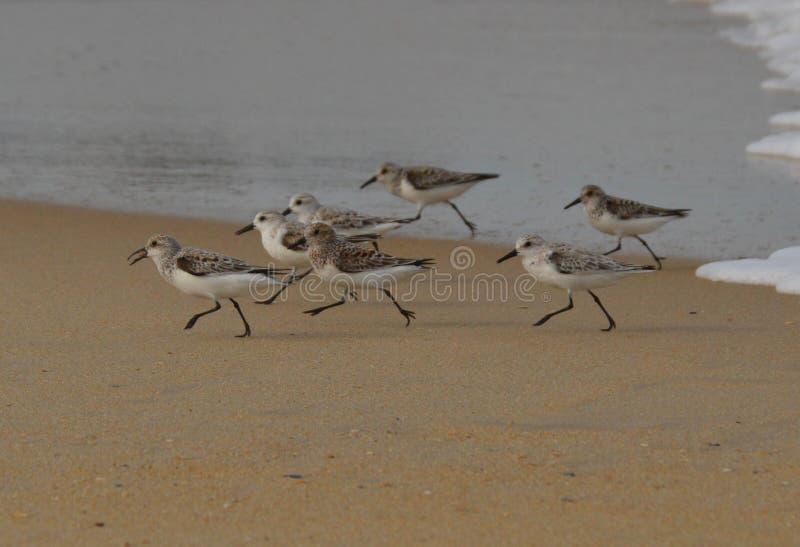 Shore Birds stock photography